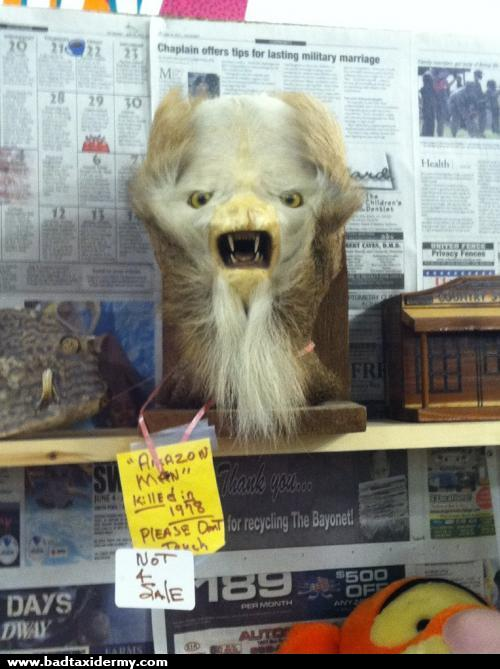 Bad taxidermy is the perfect mix of hilarious and terrifying