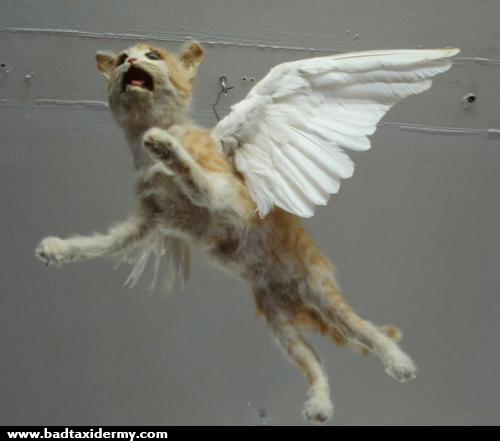 80 Bad taxidermy is the perfect mix of hilarious and terrifying